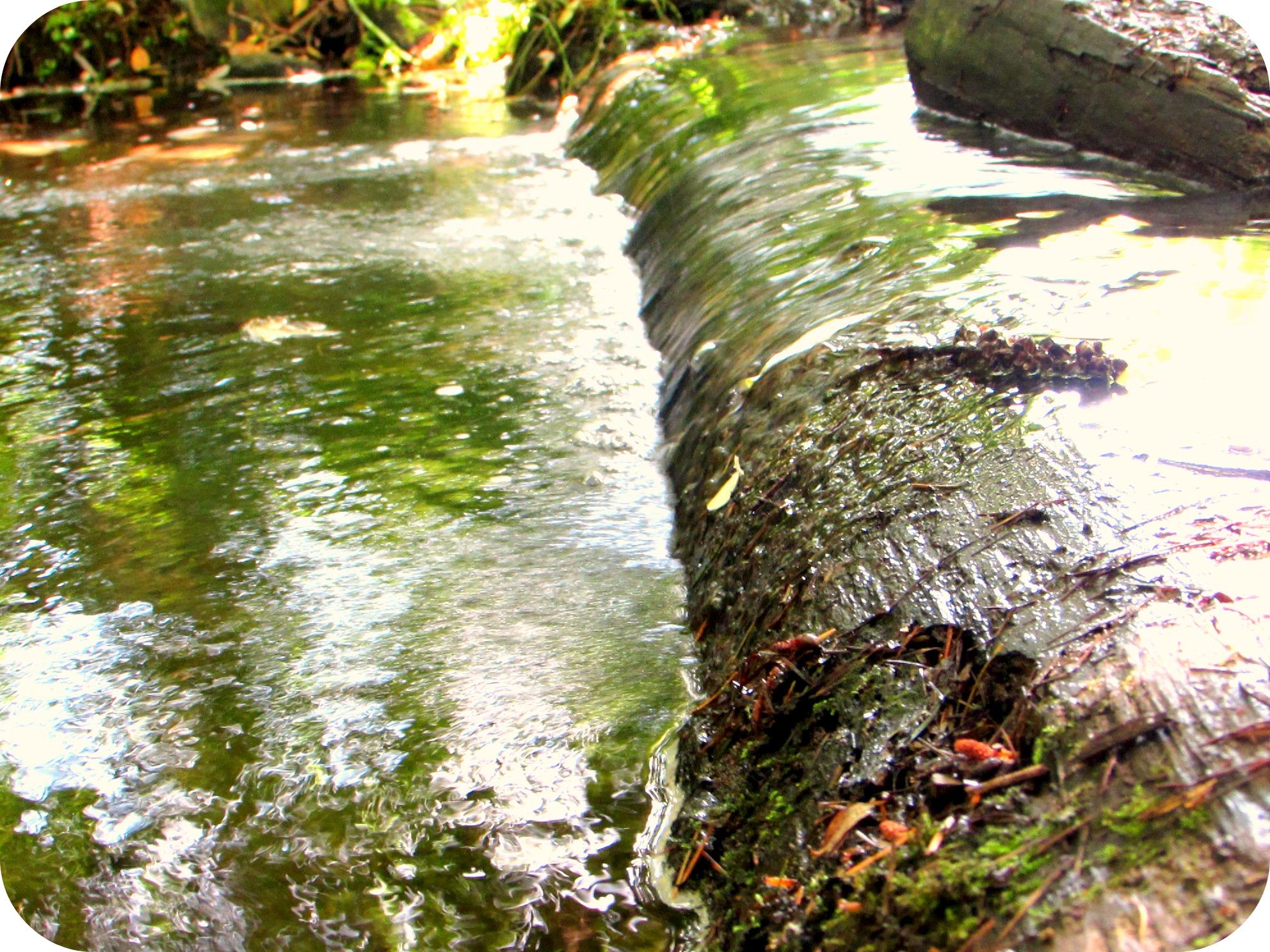 The rushing waters of Hamm Creek