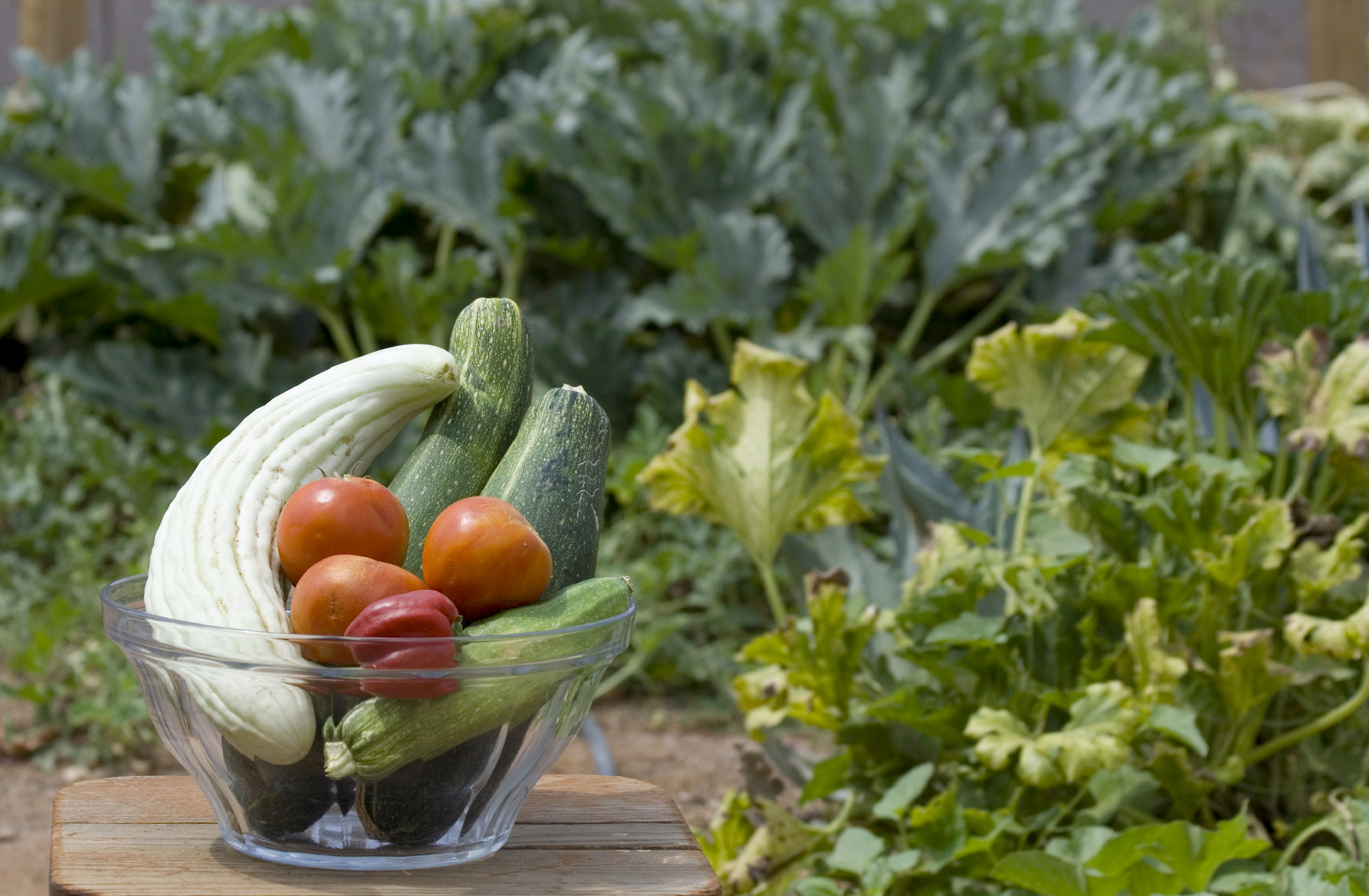 squash, tomatoes, vegetables in bowl