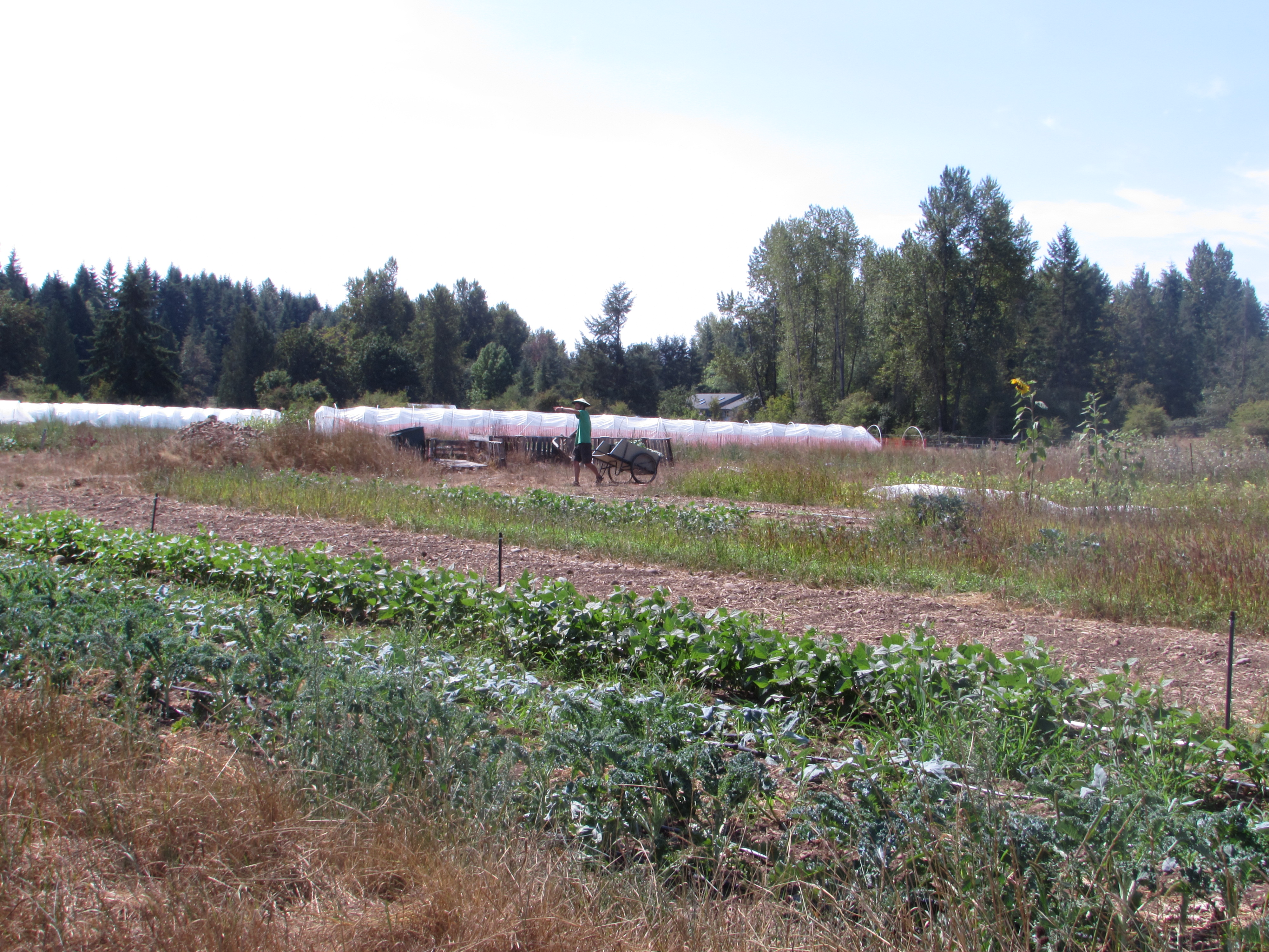 A farmer pulls his wheelbarrow across Seattle Tilth Farm Works