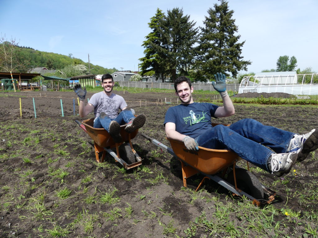 Volunteers and wheelbarrows