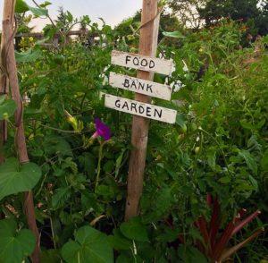 Food Bank garden plot, Magnuson Community Garden