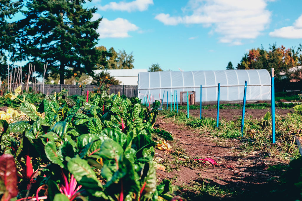 Solid Ground's Marra Farm Giving Garden in the fall