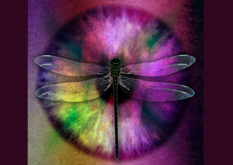 dragonfly over purple eye