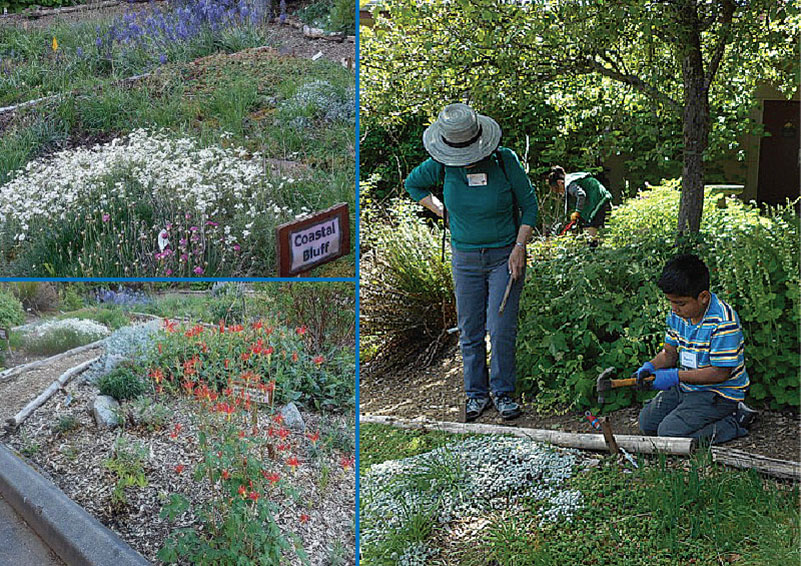 Shoreline native plant community garden