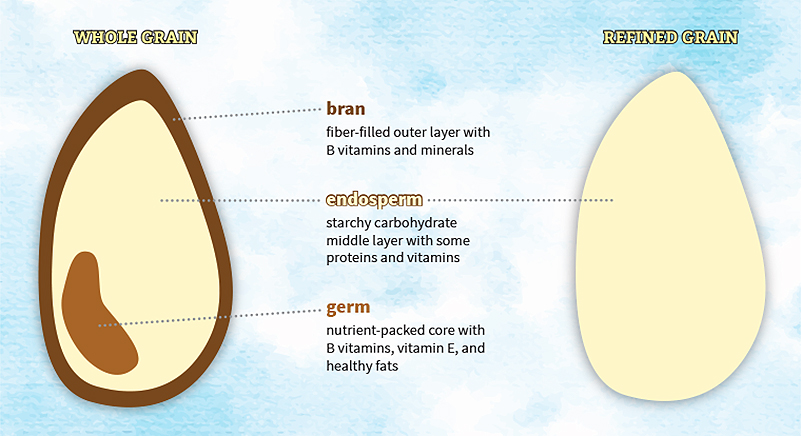 Diagram of whole & refined grains