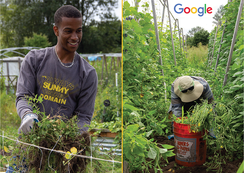 Google employees have a work party at Solid Ground's Giving Garden at Marra Farm
