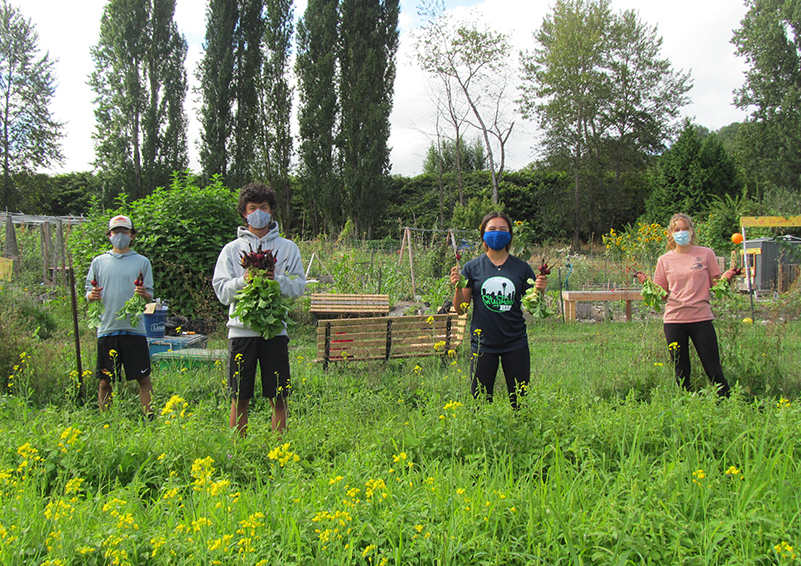 Four teenager wearing face masks and holding bunches of radishes stand distanced from each other on a farm with bright green and yellow weeds in the foreground.