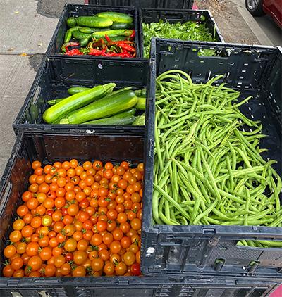 Bins full of veggies